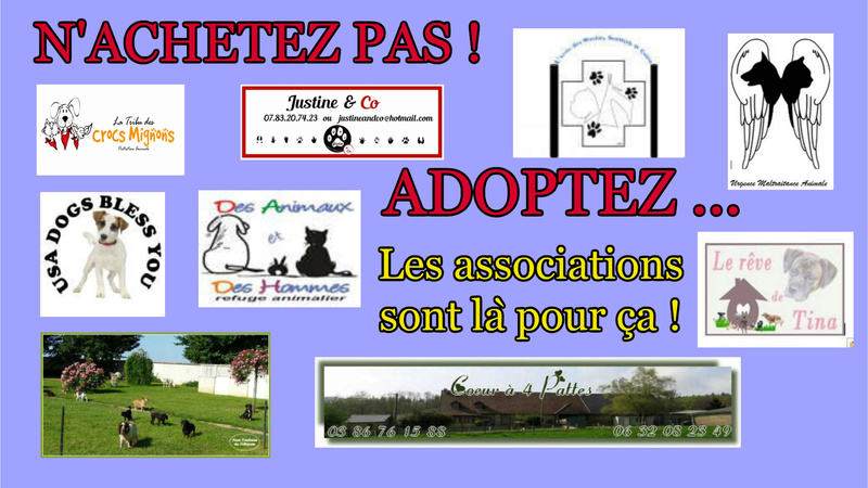 Adoption chienne adulte Www_ki11