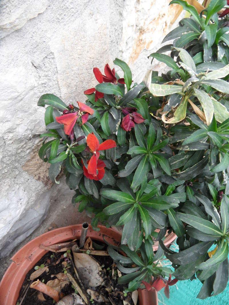 Floraisons de novembre - Page 11 06610