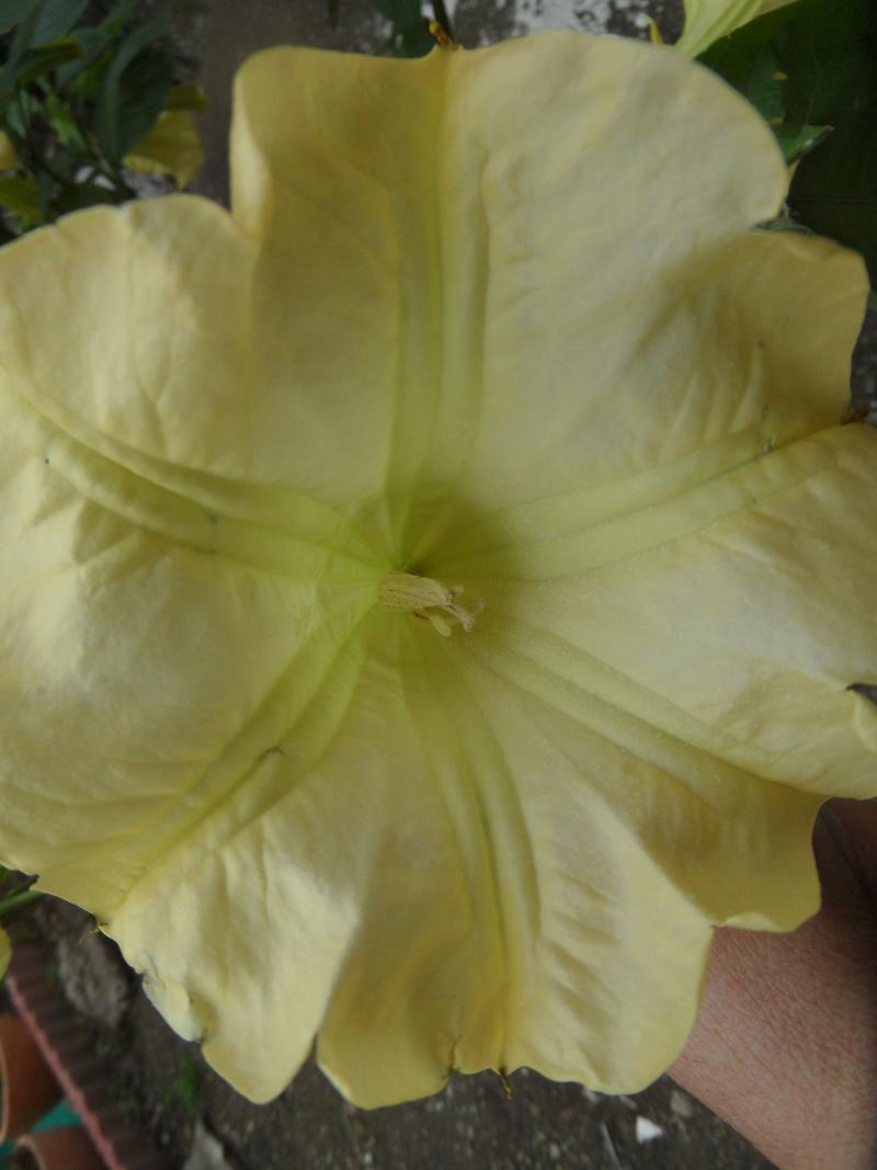 Floraisons de novembre - Page 11 07210