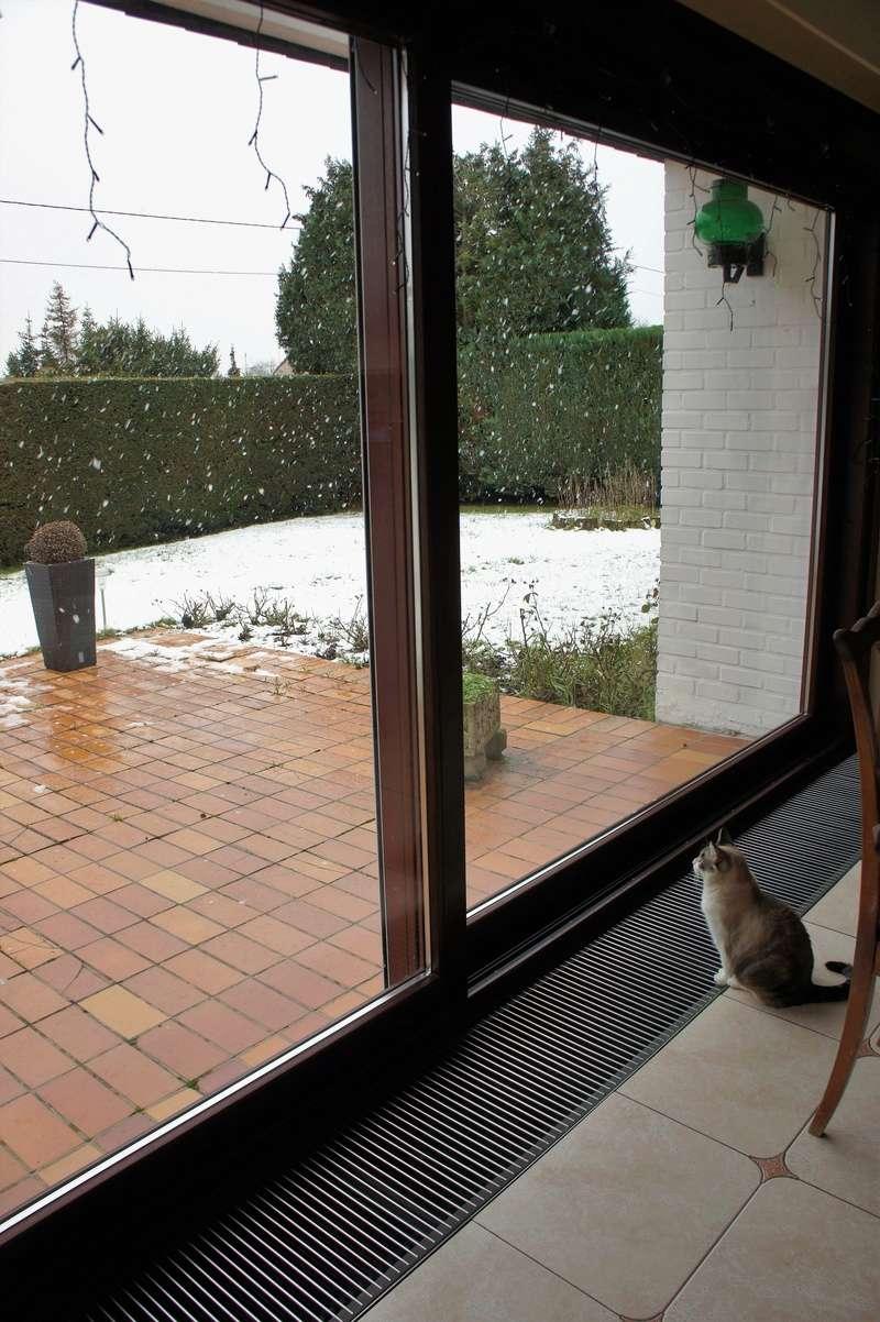 Laïka jeune chatte typée siamoise, gestante, à la rue - Page 3 Dsc08710