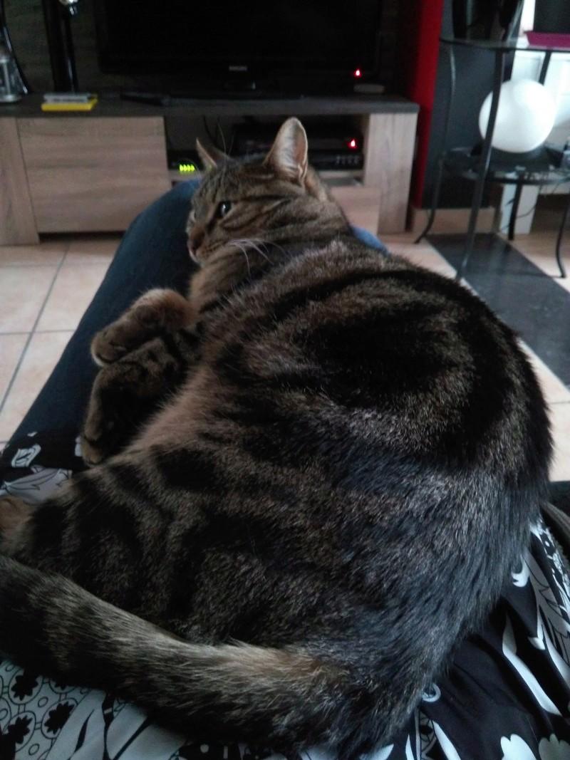 GRIBOUILLE, adorable chaton marbré de 10 semaines - Page 3 Img_2011