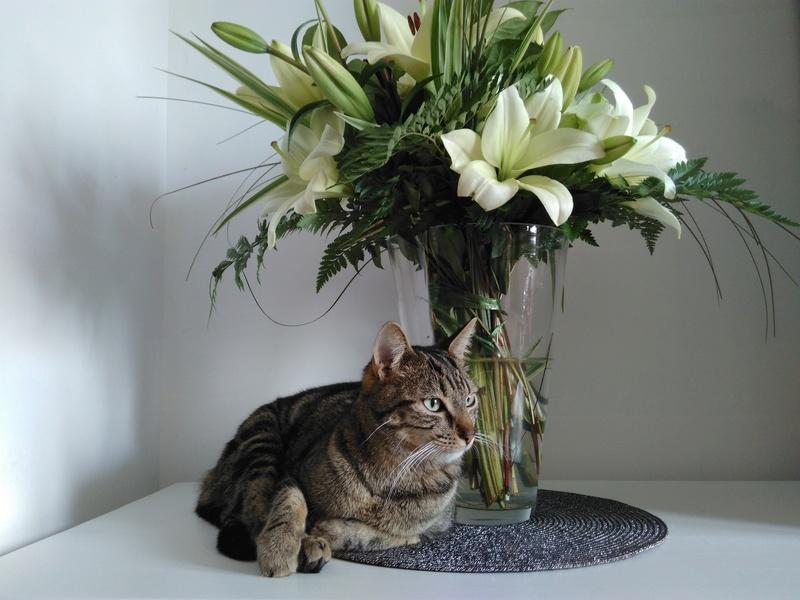 GRIBOUILLE, adorable chaton marbré de 10 semaines - Page 3 Img_2012