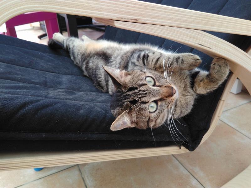 GRIBOUILLE, adorable chaton marbré de 10 semaines - Page 3 Img_2013