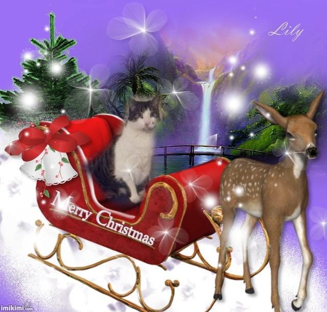 Le Noël de Lily Y3mo-116