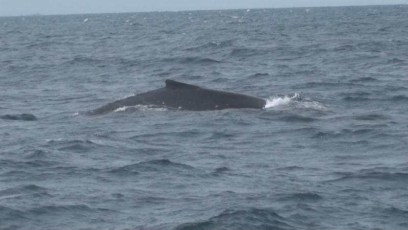 L'aquarium de Nouméa [Nouvelle Calédonie] + Baleines! Dsc00111