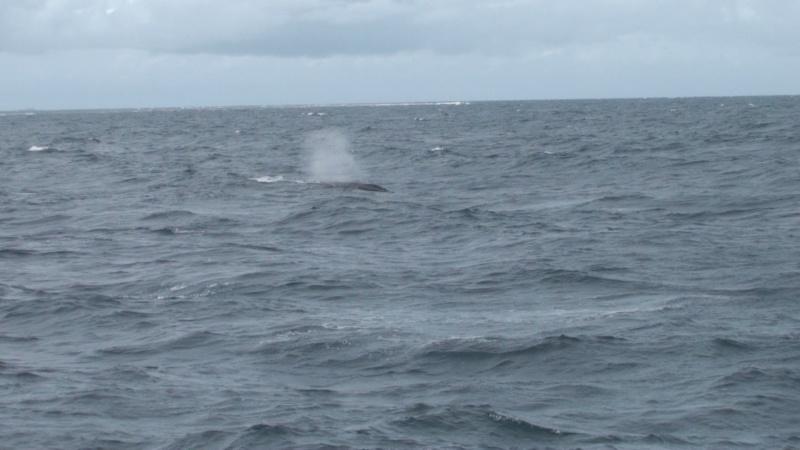 L'aquarium de Nouméa [Nouvelle Calédonie] + Baleines! Dsc00112