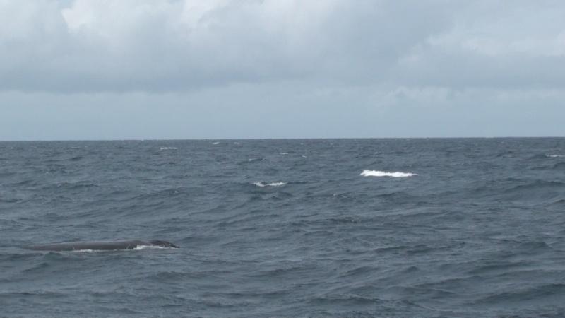 L'aquarium de Nouméa [Nouvelle Calédonie] + Baleines! Dsc00113