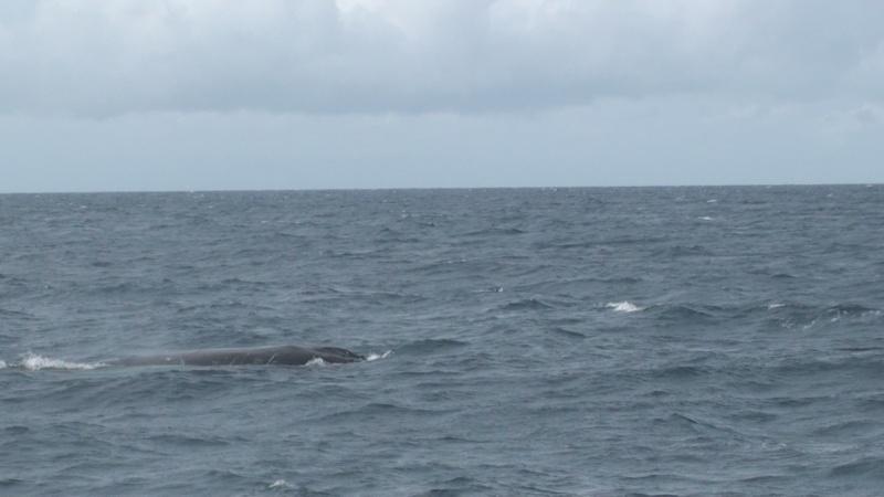 L'aquarium de Nouméa [Nouvelle Calédonie] + Baleines! Dsc00114