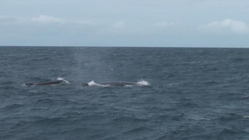L'aquarium de Nouméa [Nouvelle Calédonie] + Baleines! Dsc00115