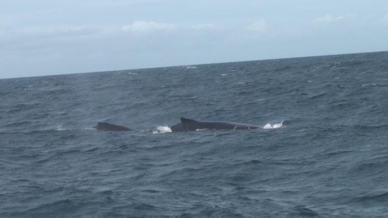 L'aquarium de Nouméa [Nouvelle Calédonie] + Baleines! Dsc00116