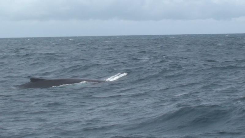 L'aquarium de Nouméa [Nouvelle Calédonie] + Baleines! Dsc00117