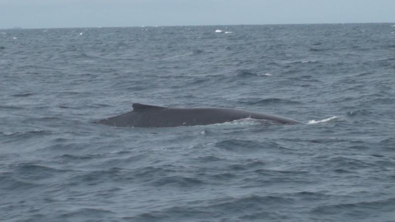 L'aquarium de Nouméa [Nouvelle Calédonie] + Baleines! Dsc00118