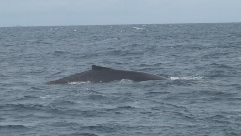L'aquarium de Nouméa [Nouvelle Calédonie] + Baleines! Dsc00119