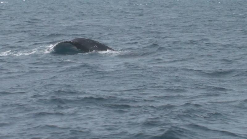 L'aquarium de Nouméa [Nouvelle Calédonie] + Baleines! Dsc00120