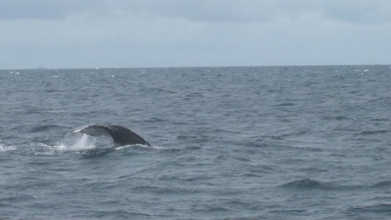 L'aquarium de Nouméa [Nouvelle Calédonie] + Baleines! Dsc00121