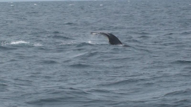 L'aquarium de Nouméa [Nouvelle Calédonie] + Baleines! Dsc00122