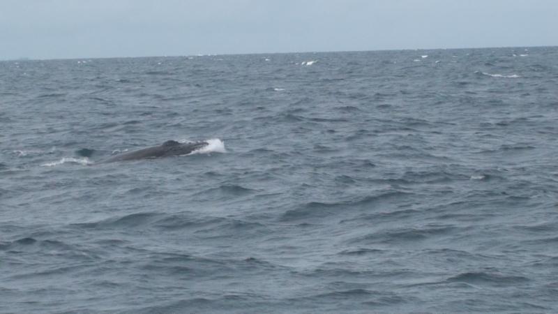L'aquarium de Nouméa [Nouvelle Calédonie] + Baleines! Dsc00123
