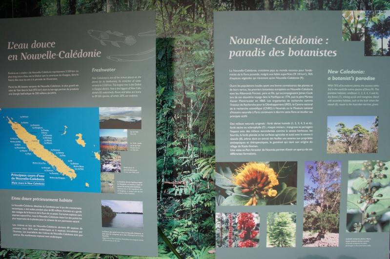L'aquarium de Nouméa [Nouvelle Calédonie] + Baleines! Dsc02111