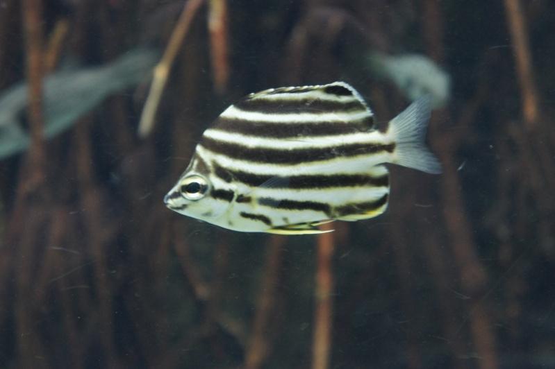 L'aquarium de Nouméa [Nouvelle Calédonie] + Baleines! Dsc02115