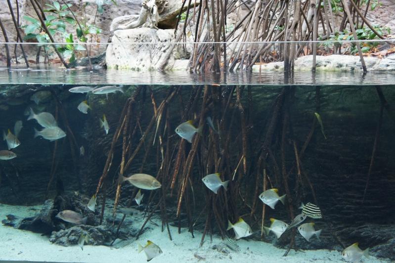 L'aquarium de Nouméa [Nouvelle Calédonie] + Baleines! Dsc02116
