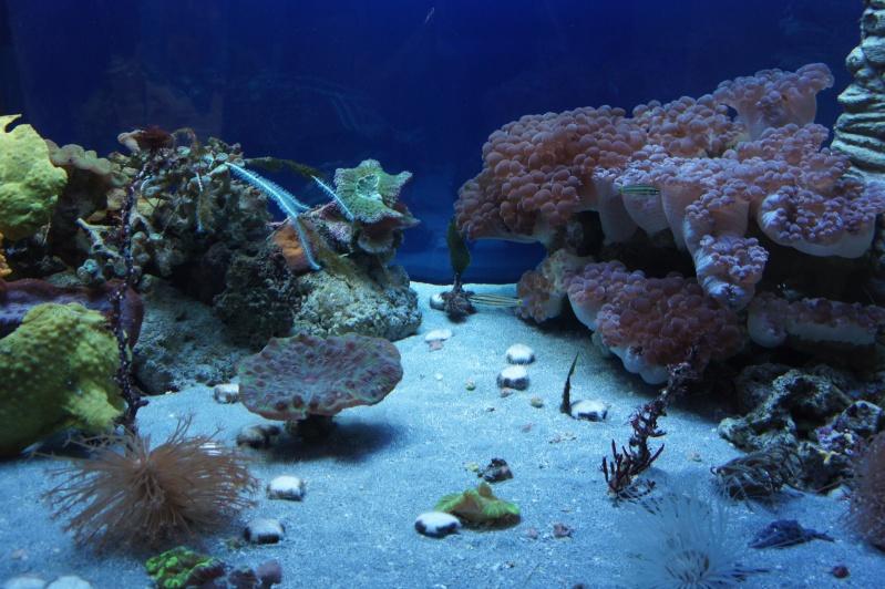L'aquarium de Nouméa [Nouvelle Calédonie] + Baleines! Dsc02118