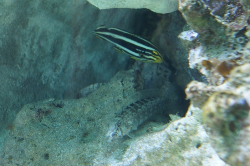 L'aquarium de Nouméa [Nouvelle Calédonie] + Baleines! Dsc02119