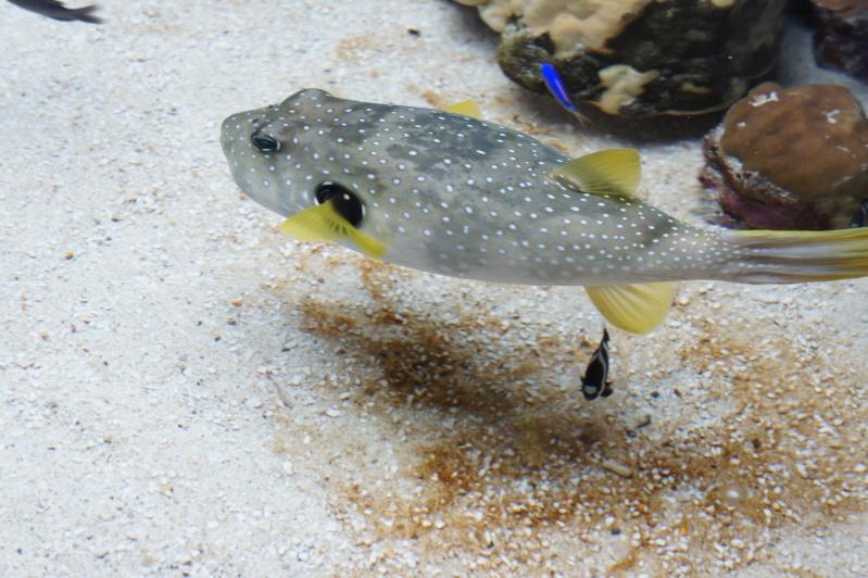 L'aquarium de Nouméa [Nouvelle Calédonie] + Baleines! Dsc02123