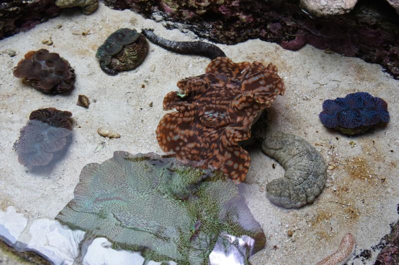 L'aquarium de Nouméa [Nouvelle Calédonie] + Baleines! Dsc02126