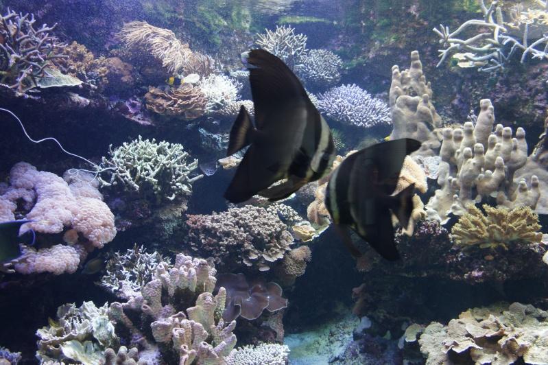 L'aquarium de Nouméa [Nouvelle Calédonie] + Baleines! Dsc02130