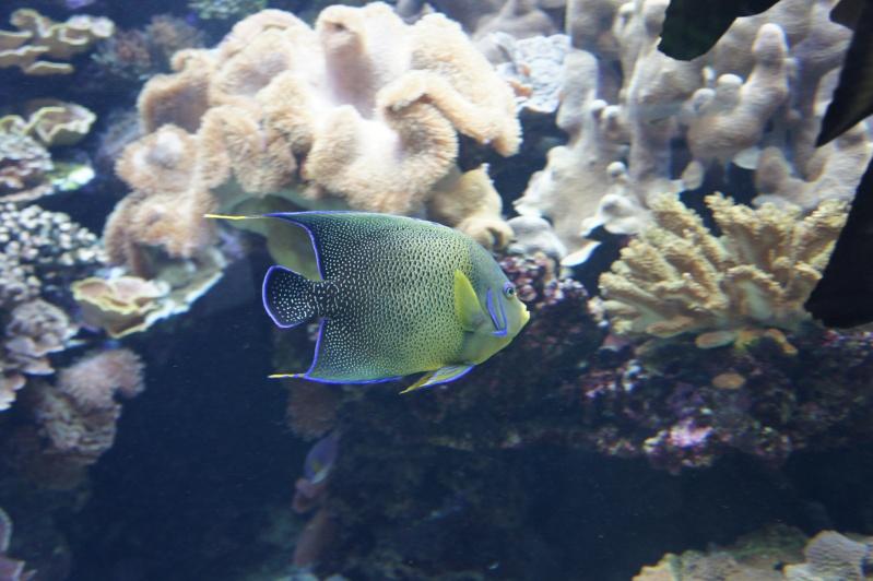 L'aquarium de Nouméa [Nouvelle Calédonie] + Baleines! Dsc02131