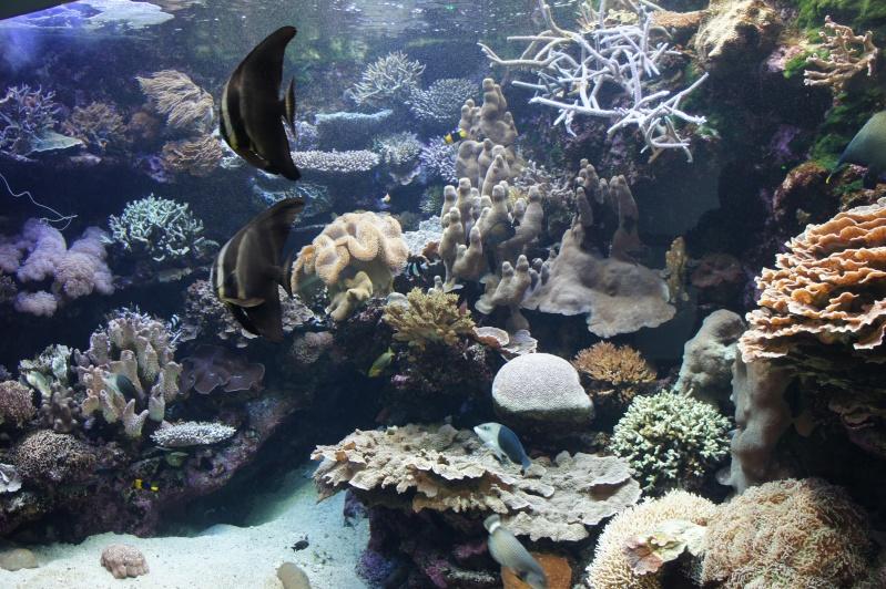 L'aquarium de Nouméa [Nouvelle Calédonie] + Baleines! Dsc02133