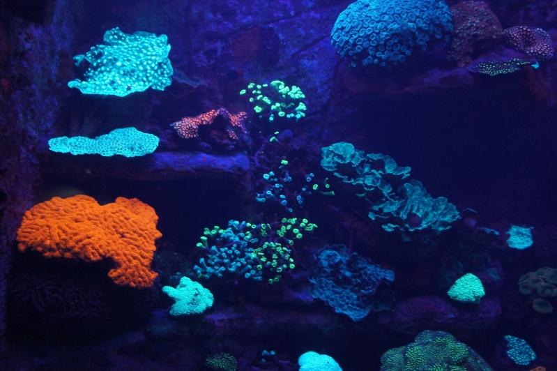 L'aquarium de Nouméa [Nouvelle Calédonie] + Baleines! Dsc02134