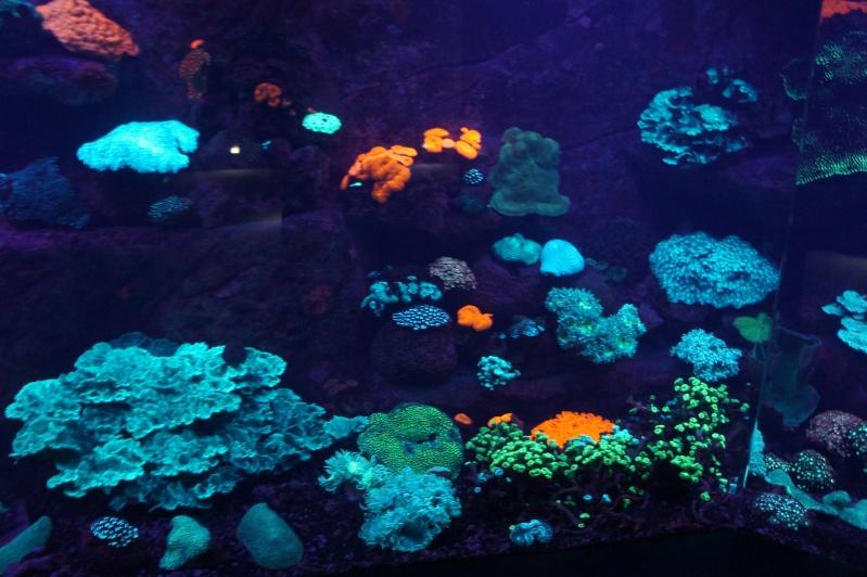 L'aquarium de Nouméa [Nouvelle Calédonie] + Baleines! Dsc02135