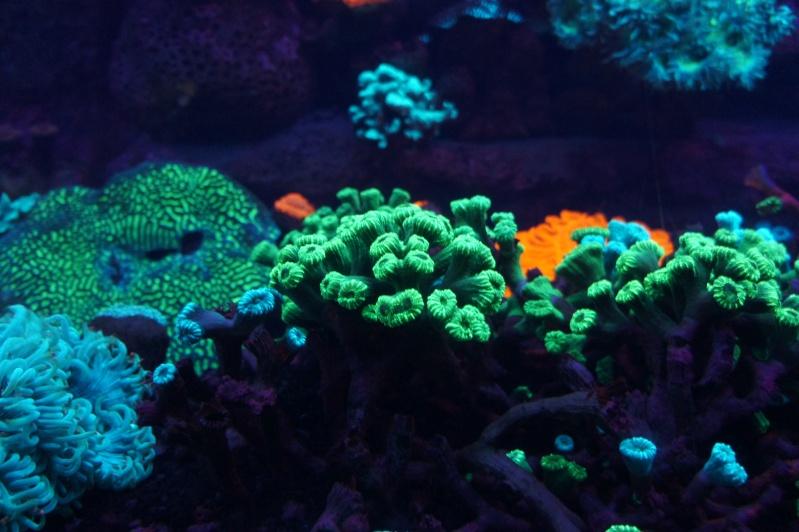L'aquarium de Nouméa [Nouvelle Calédonie] + Baleines! Dsc02136