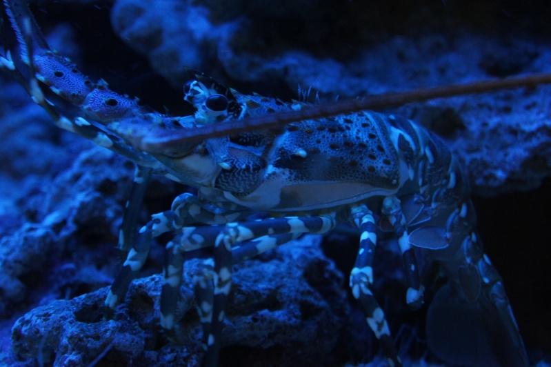 L'aquarium de Nouméa [Nouvelle Calédonie] + Baleines! Dsc02137