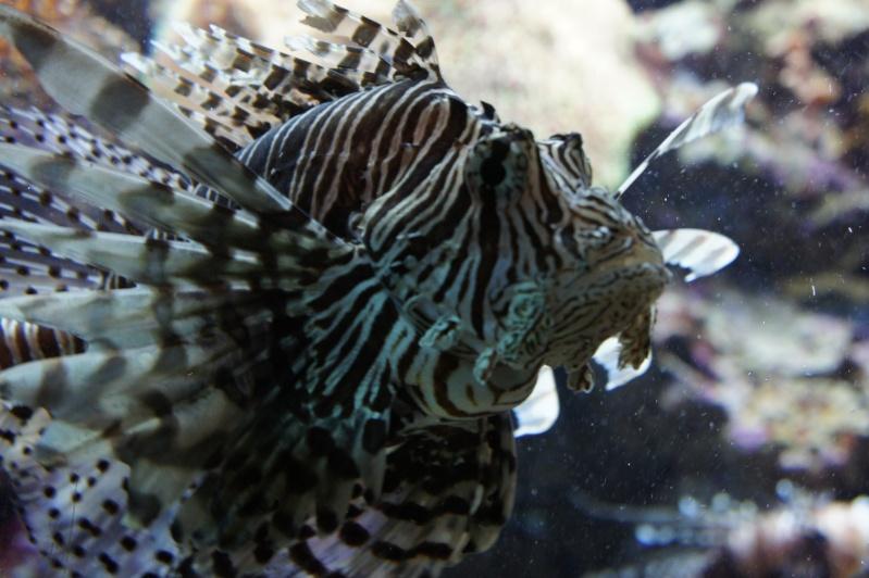 L'aquarium de Nouméa [Nouvelle Calédonie] + Baleines! Dsc02138