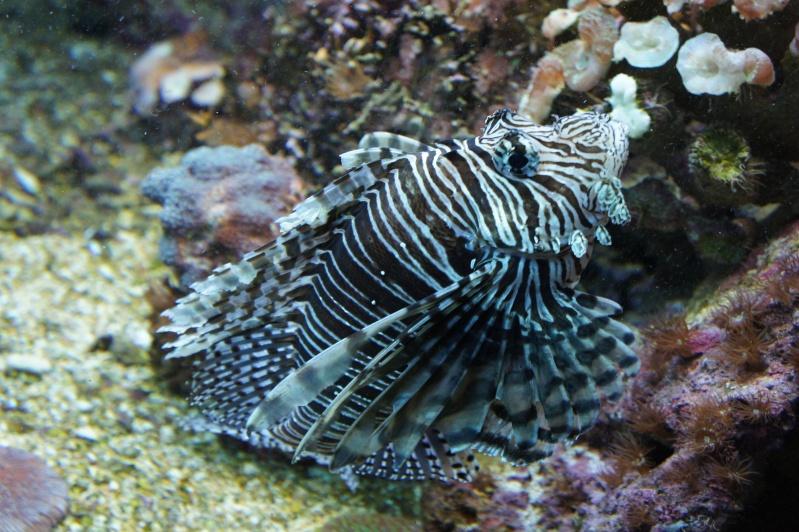 L'aquarium de Nouméa [Nouvelle Calédonie] + Baleines! Dsc02139