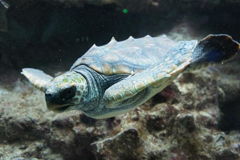 L'aquarium de Nouméa [Nouvelle Calédonie] + Baleines! Dsc02143