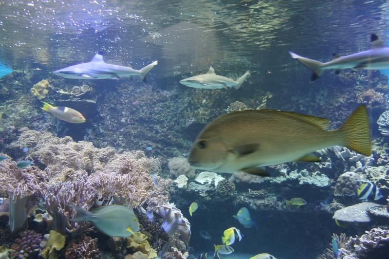 L'aquarium de Nouméa [Nouvelle Calédonie] + Baleines! Dsc02144