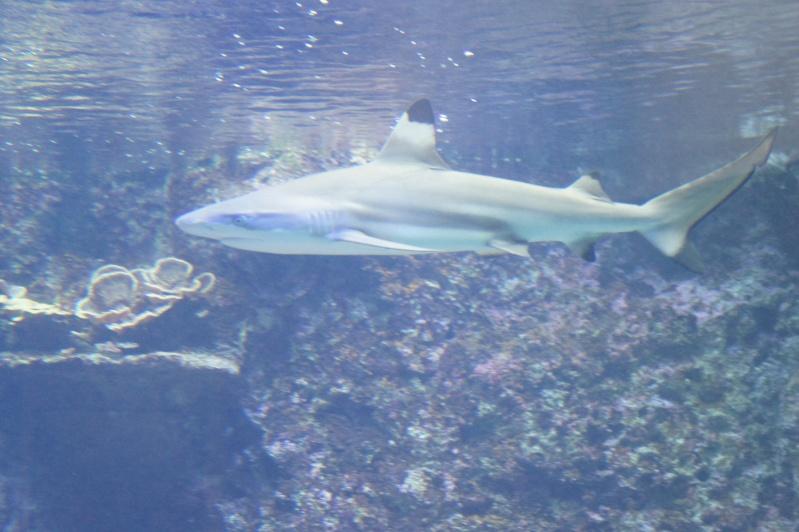 L'aquarium de Nouméa [Nouvelle Calédonie] + Baleines! Dsc02145