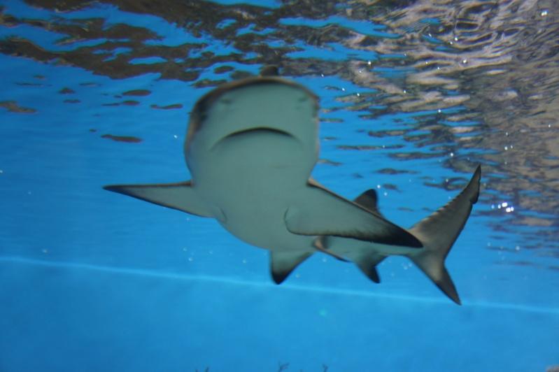 L'aquarium de Nouméa [Nouvelle Calédonie] + Baleines! Dsc02146