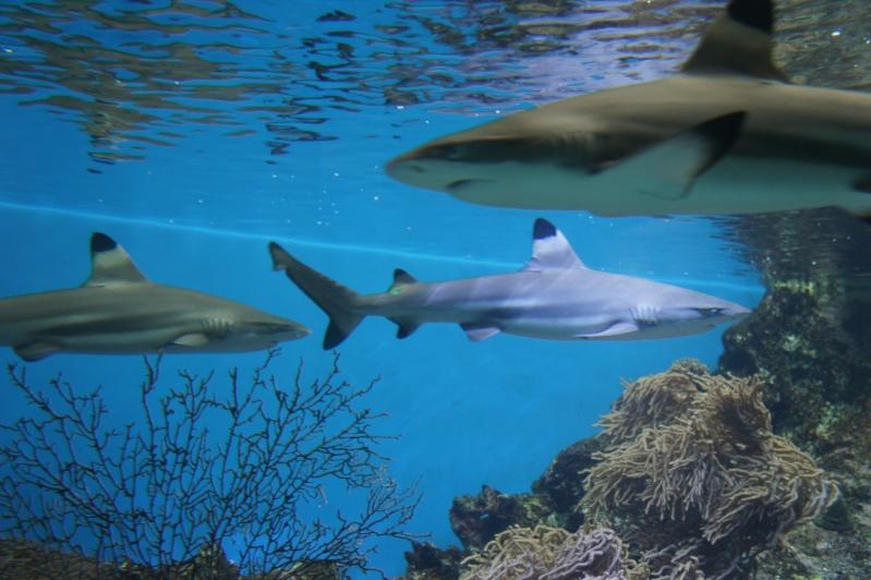 L'aquarium de Nouméa [Nouvelle Calédonie] + Baleines! Dsc02147