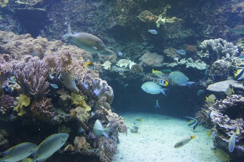 L'aquarium de Nouméa [Nouvelle Calédonie] + Baleines! Dsc02148