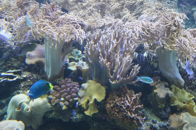 L'aquarium de Nouméa [Nouvelle Calédonie] + Baleines! Dsc02149