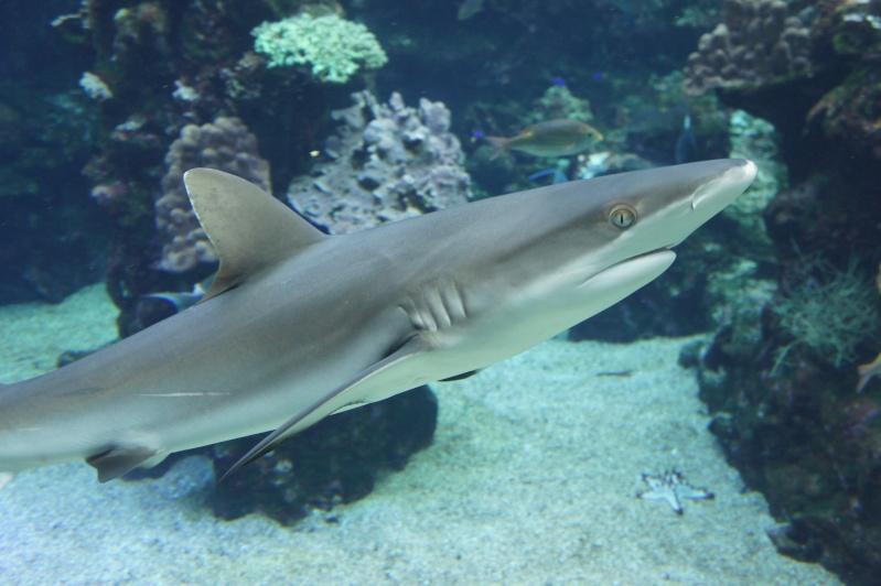 L'aquarium de Nouméa [Nouvelle Calédonie] + Baleines! Dsc02213