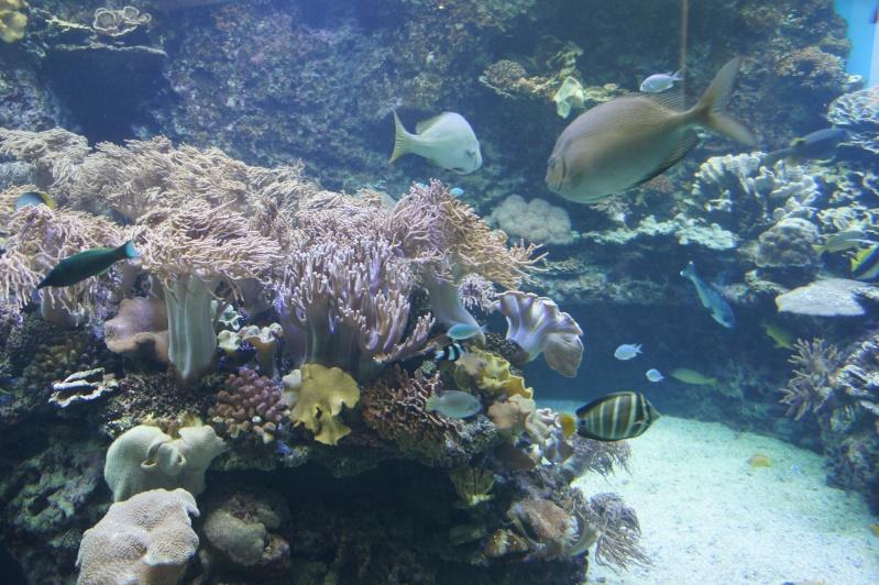L'aquarium de Nouméa [Nouvelle Calédonie] + Baleines! Dsc02214
