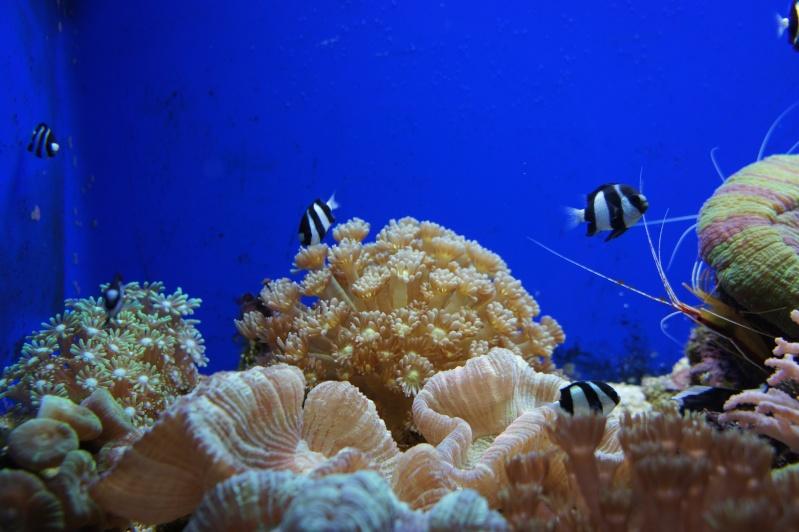L'aquarium de Nouméa [Nouvelle Calédonie] + Baleines! Dsc02216