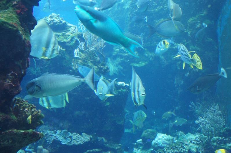 L'aquarium de Nouméa [Nouvelle Calédonie] + Baleines! Dsc02221