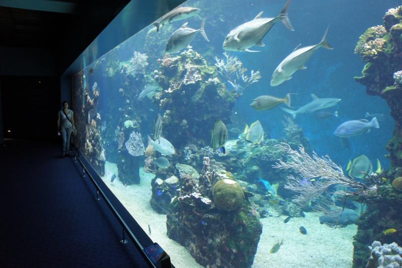 L'aquarium de Nouméa [Nouvelle Calédonie] + Baleines! Dsc02222
