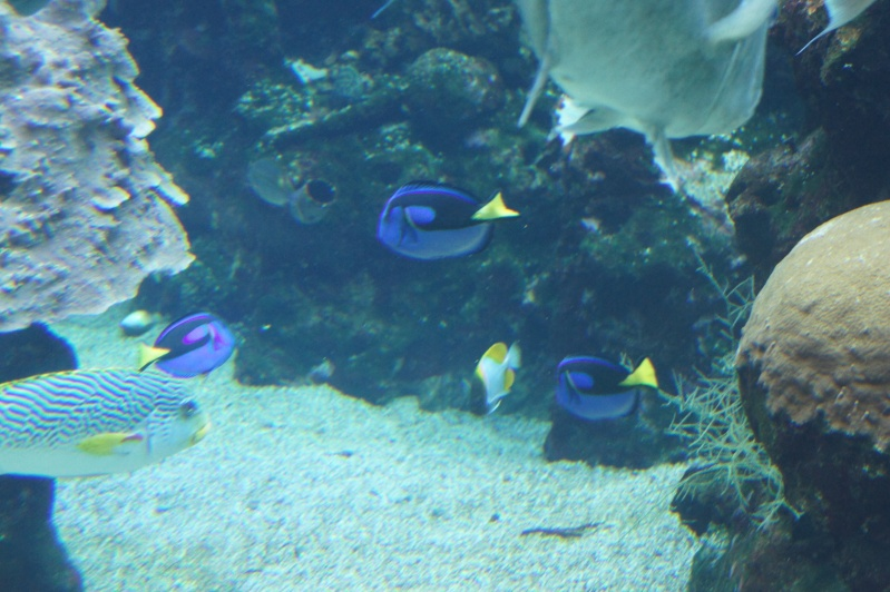 L'aquarium de Nouméa [Nouvelle Calédonie] + Baleines! Dsc02223